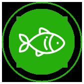 рыба оптом