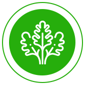 зелень оптом в Ставрополе